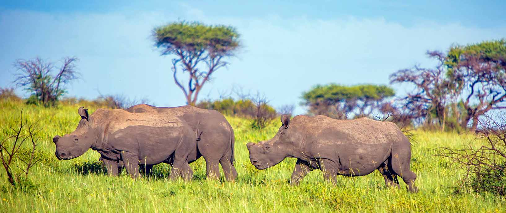 Endangered Rhino Conservation Travel Visit ERC
