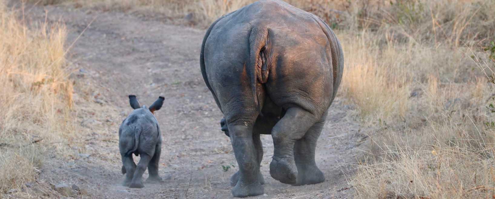 Endangered Rhino Conservation ERC Saving Rhinos Slider Image 2