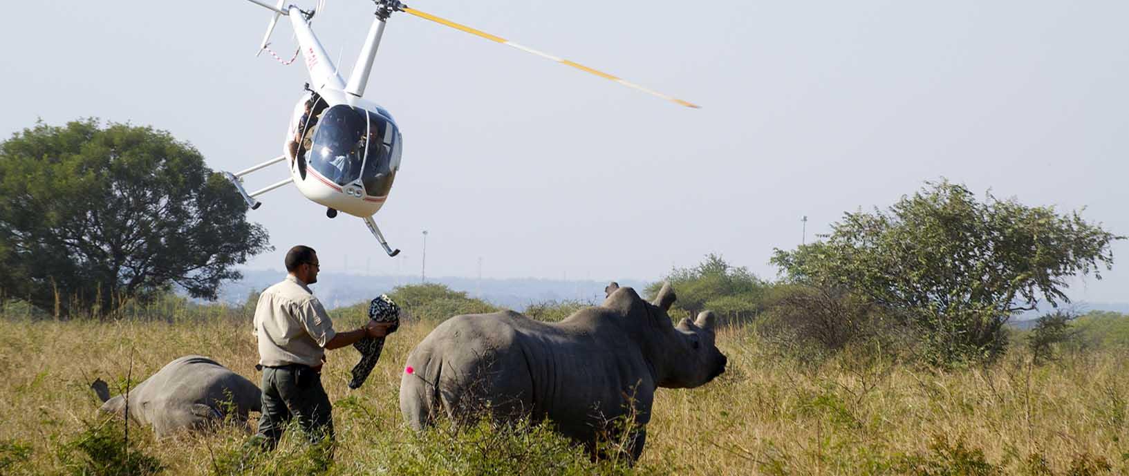 Endangered Rhino Conservation ERC Saving Rhinos Slider Image 4