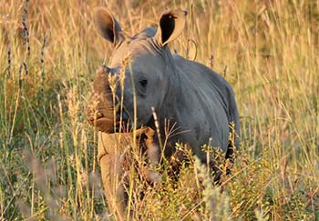 Endangered Rhino Conservation About Us
