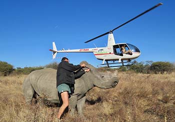 Endangered Rhino Conservation Saving Rhinos