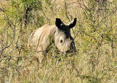 Meet Our Rhinos - Cori