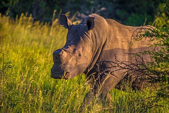 Meet Our Rhinos - Dougie