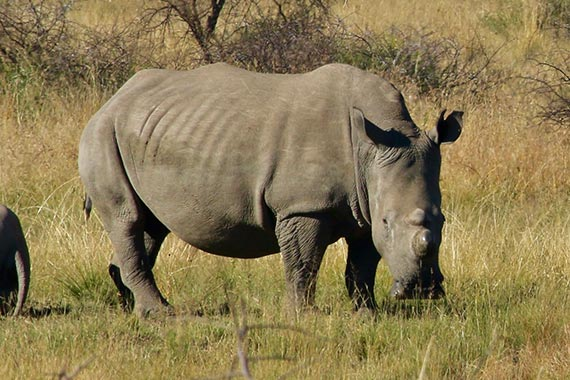 Meet Our Rhinos - Jodi