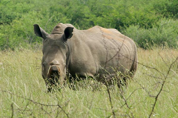 Meet Our Rhinos - Kelly