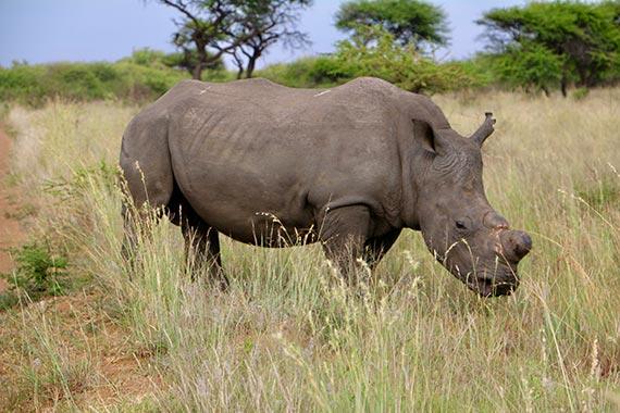 Meet Our Rhinos - Logan