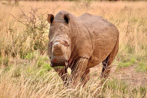 Meet Our Rhinos - Luke