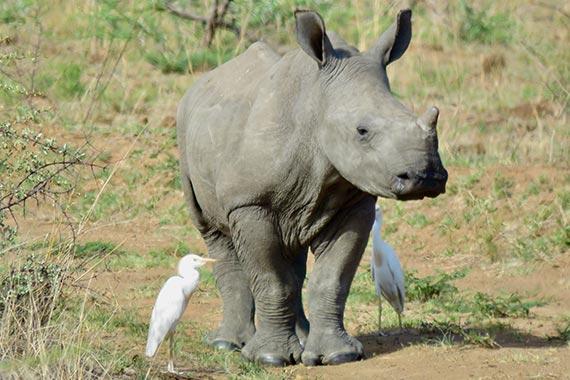 Meet Our Rhinos - Mac