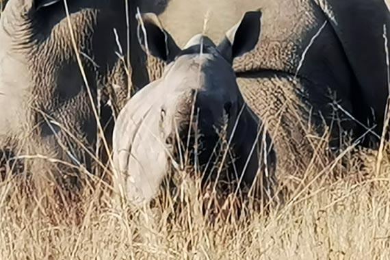 Meet Our Rhinos - Magen
