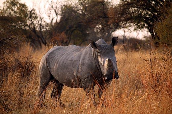 Meet Our Rhinos - Jimbo