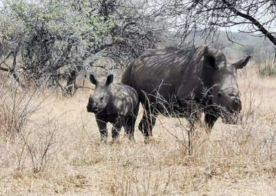 Nkombi and Corri