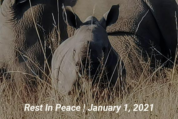 Magen - Rest in Peace - Meet Our Rhinos Page