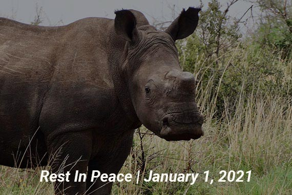 Reine - Rest in Peace - Meet Our Rhinos Page