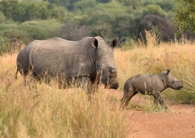 Endangered Rhino - Wendy and Kelly