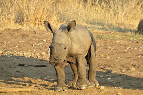 Meet Our Rhinos - Hope